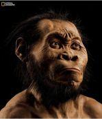 Reconstrucción del aspecto que el Homo Naledi podría haber tenido.