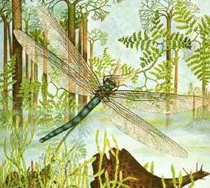 Resultado de imagen de Lugar de la Tierra donde proliferan más insectos